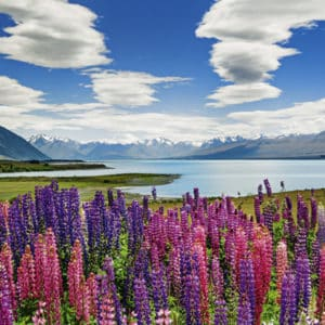 Buy HEYE Lake Tekapo (1000 Piece Jigsaw Puzzle) and other great jigsaw puzzles only at Jigsaw Nation