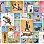 yoga-cats-f9a58ae86bbfbda66c99fdd45aa766ef