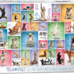 yoga-dogs-1e4be996cd53379a9b1634e17b86a044