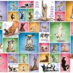yoga-dogs-e0014e8075c84e45b20b780e5c305636