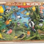 garden-birds-13f100eb64864c56d1974bfec5754c6d