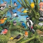 garden-birds-1ef75225fafb5e35672c65122648c91d