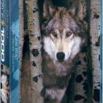 gray-wolf-e6f3fb148b93f7df84e40ebd79192305