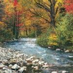 forest-stream-78dc5be57b3d3c3261794b39f5ba37f8