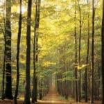forest-path-d3e45447bb1897811fa578755a8b61ce