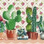 cactus-family-3d69fa3a09597c50de064699523a08ac