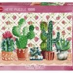 cactus-family-f099c93d09029c1a6e0aa1650d66f710