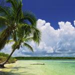 paradise-palms-7a9f1eae7334e38985c86c359d323895
