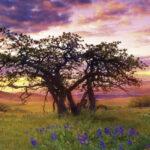 oak-tree-271a754236ecc020cbd69303a1ad339a
