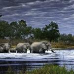 herd-of-elephants-6980f958f0c4b9a816d510c639122e6a